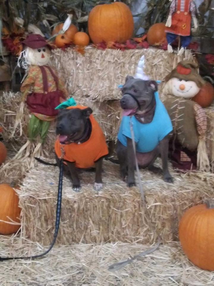 Dog Friendly Pumpkin Patch