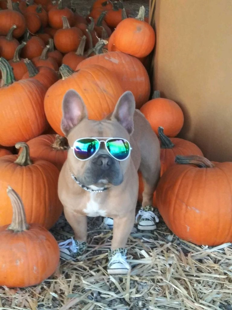 dog friendly pumpkin patch