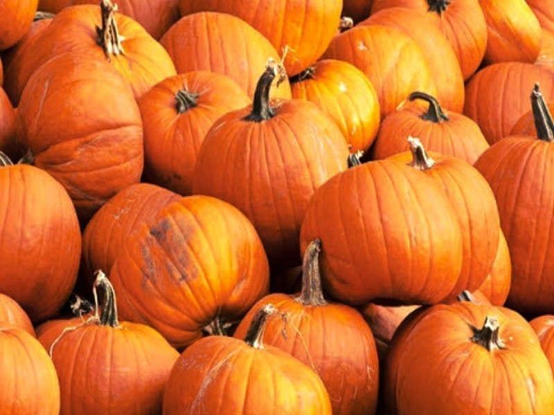 Queen Creek Pumpkin Patch