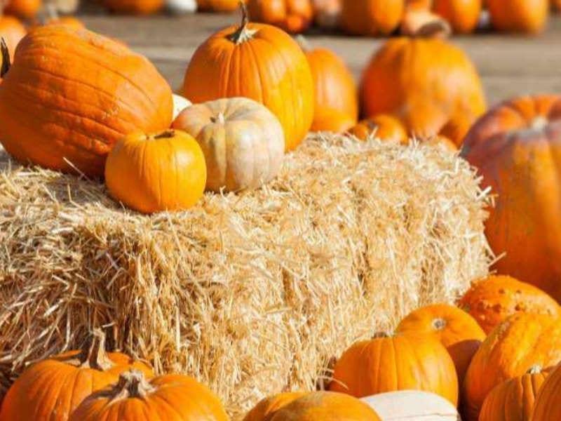 Queen Creek Pumpkin Patch Strawbales
